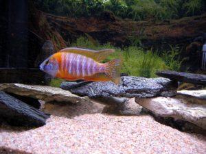 aquarium sand gravel
